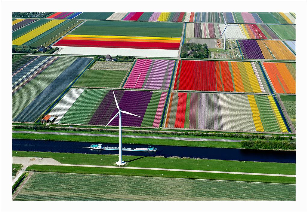 オランダのチューリップ畑の空中ツアー (1)