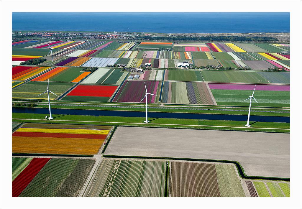 オランダのチューリップ畑の空中ツアー (10)