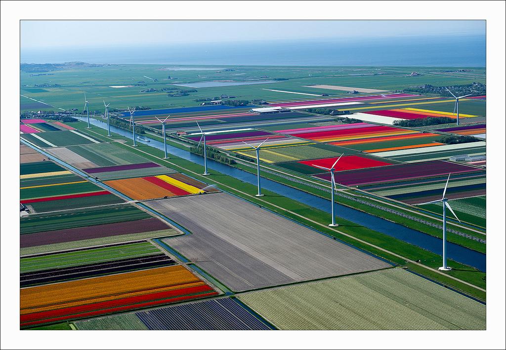 オランダのチューリップ畑の空中ツアー (2)
