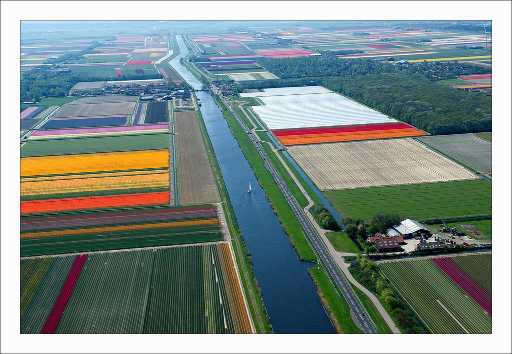オランダのチューリップ畑の空中ツアー (3)