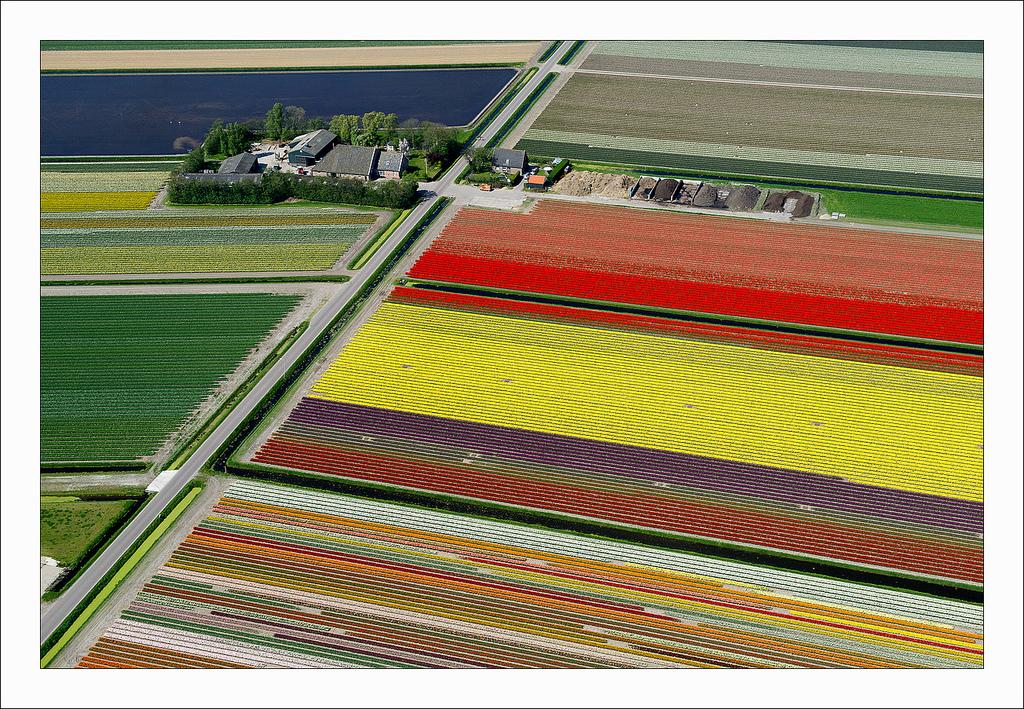 オランダのチューリップ畑の空中ツアー (4)