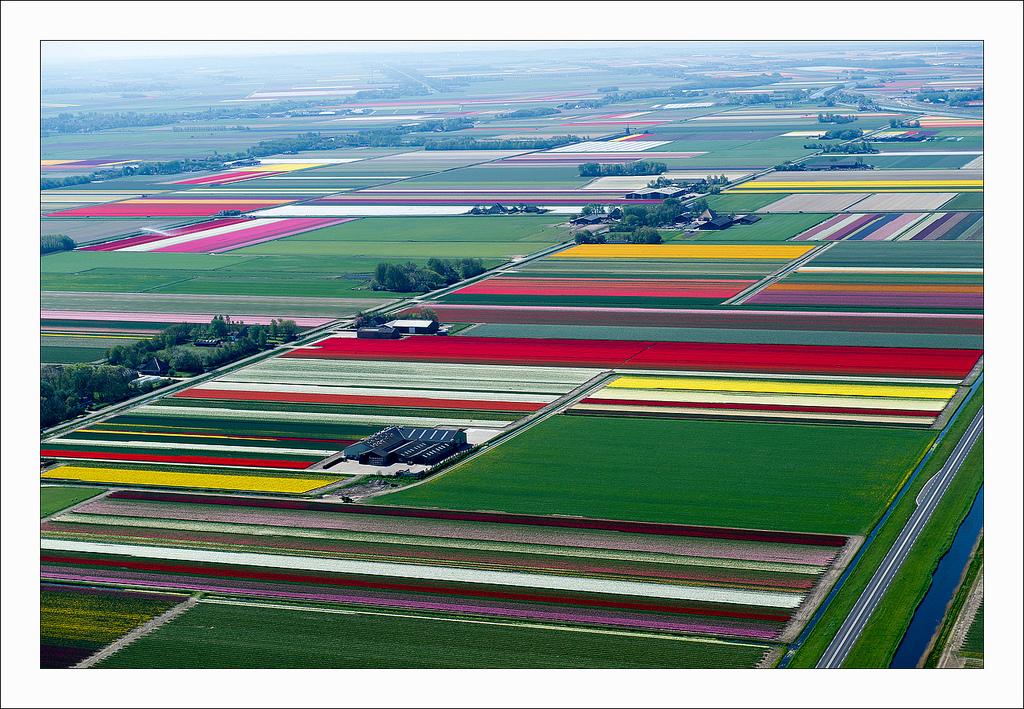 オランダのチューリップ畑の空中ツアー (5)