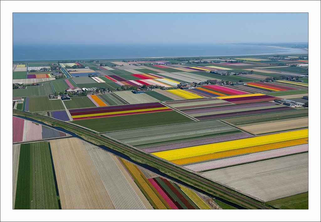 オランダのチューリップ畑の空中ツアー (6)