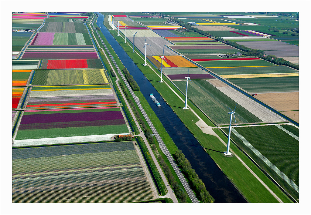 オランダのチューリップ畑の空中ツアー (7)