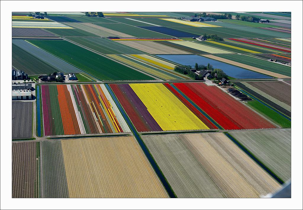 オランダのチューリップ畑の空中ツアー (8)