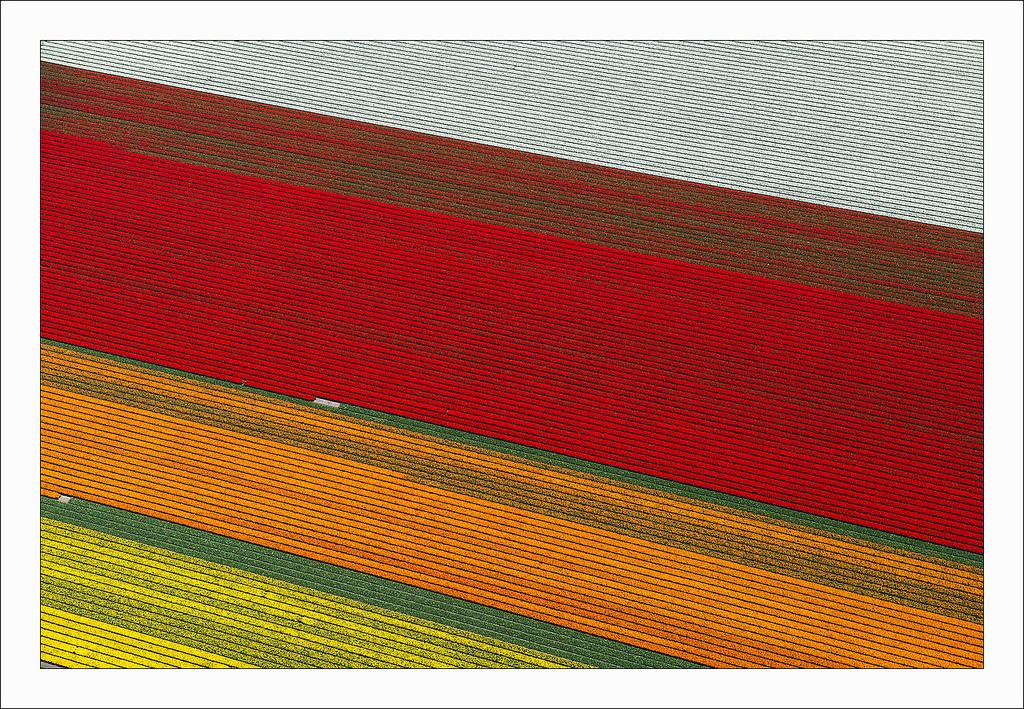 オランダのチューリップ畑の空中ツアー (9)