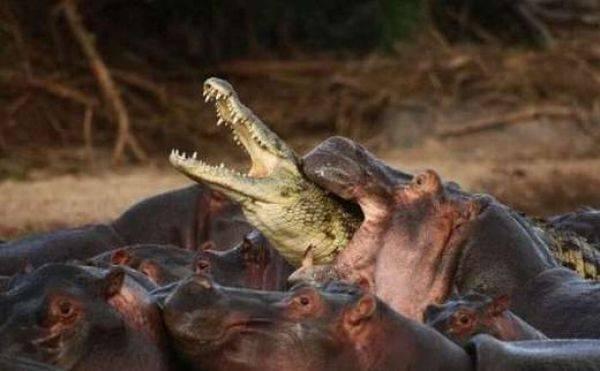 動物同士の戦い 熱いファイト画像!! (25)