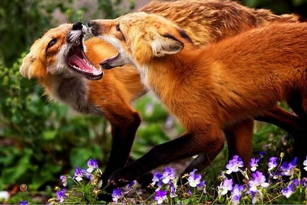 動物同士の戦い 熱いファイト画像!! (26)