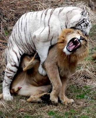 動物同士の戦い 熱いファイト画像!! (6)
