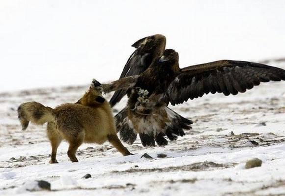 動物同士の戦い 熱いファイト画像!! (8)
