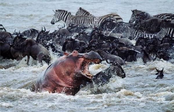 動物同士の戦い 熱いファイト画像!! (9)