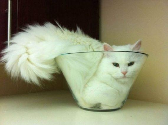 猫の奇妙な仮眠場所 (1)