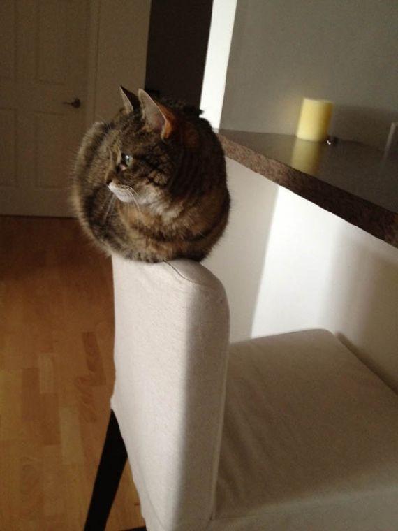 猫の奇妙な仮眠場所 (10)