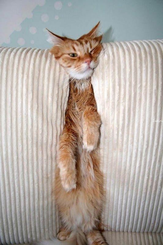 猫の奇妙な仮眠場所 (11)