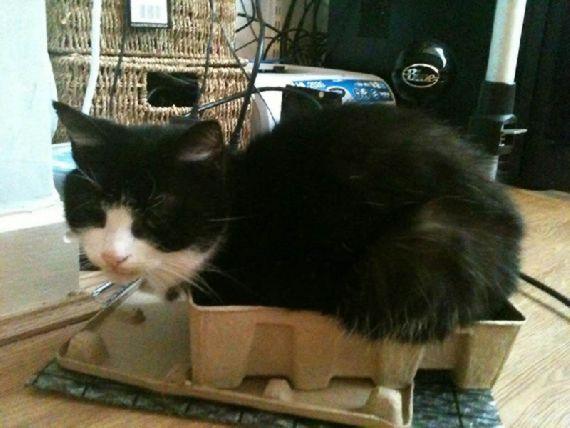 猫の奇妙な仮眠場所 (12)