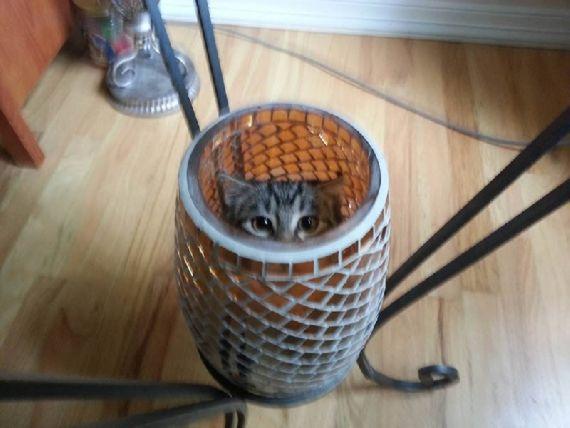 猫の奇妙な仮眠場所 (14)