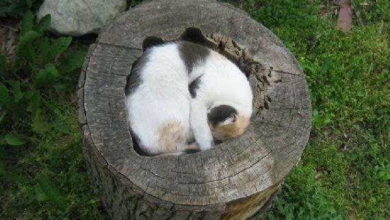 猫の奇妙な仮眠場所 (15)