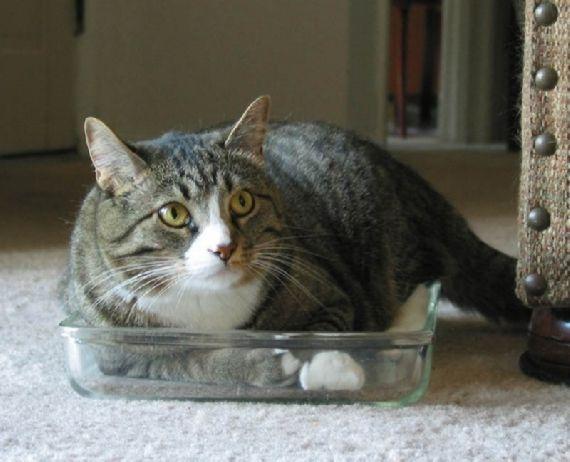 猫の奇妙な仮眠場所 (16)