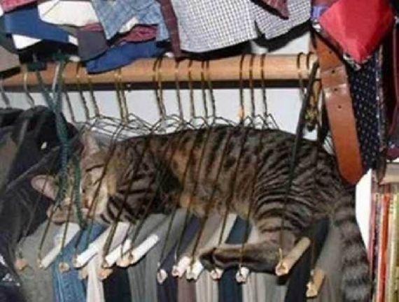 猫の奇妙な仮眠場所 (18)