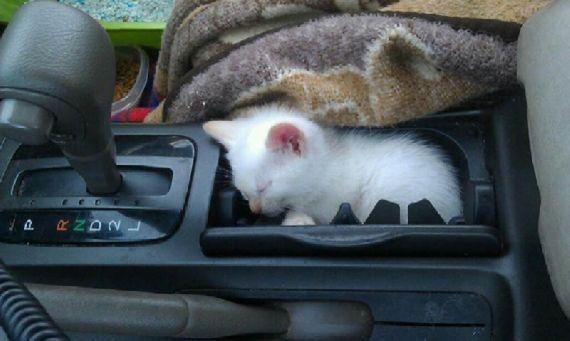 猫の奇妙な仮眠場所 (2)