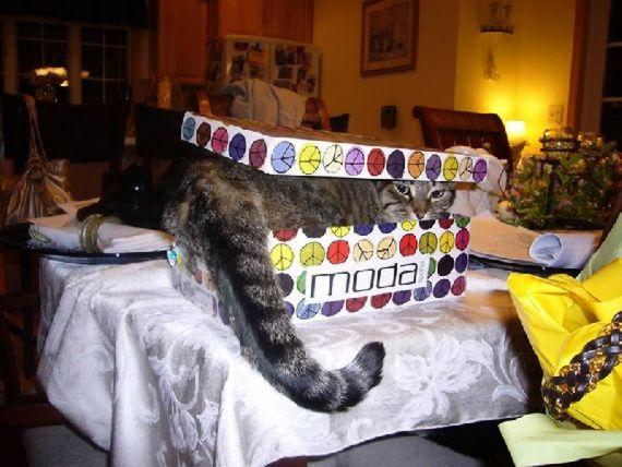 猫の奇妙な仮眠場所 (21)