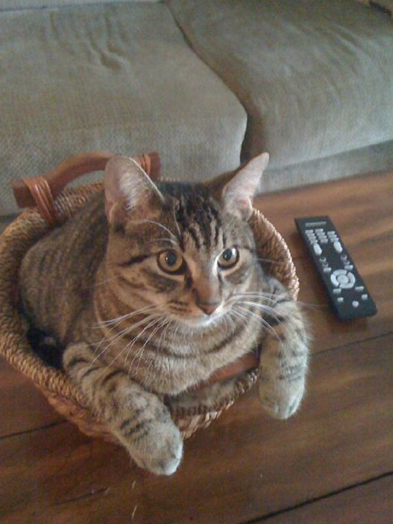 猫の奇妙な仮眠場所 (22)