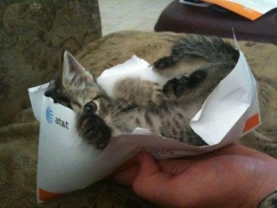 猫の奇妙な仮眠場所 (25)