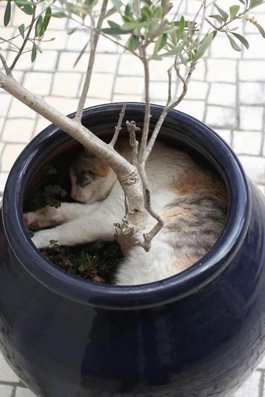 猫の奇妙な仮眠場所 (3)
