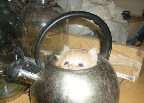 猫の奇妙な仮眠場所 (4)