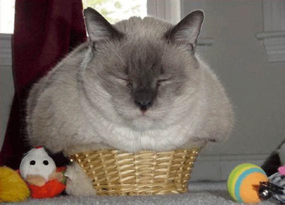 猫の奇妙な仮眠場所 (5)