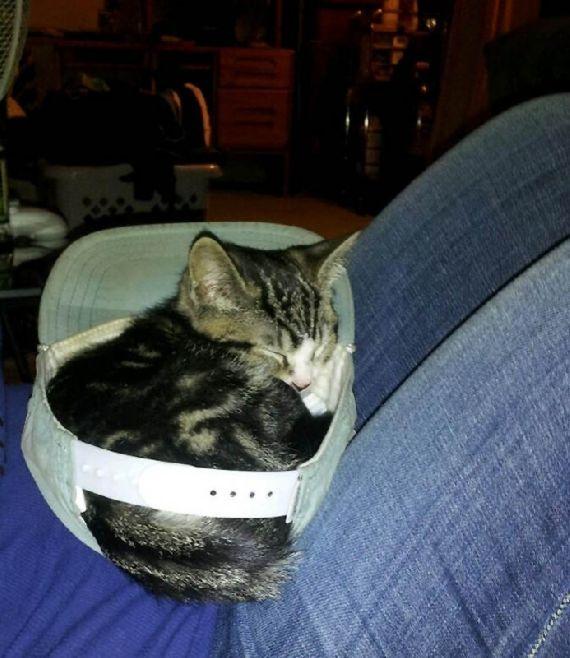 猫の奇妙な仮眠場所 (9)