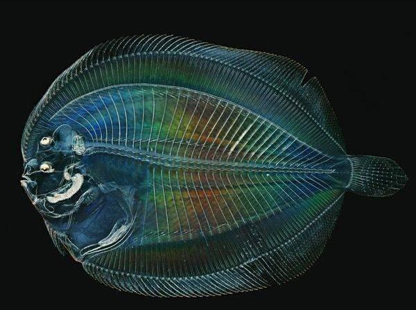 透明な生物の画像