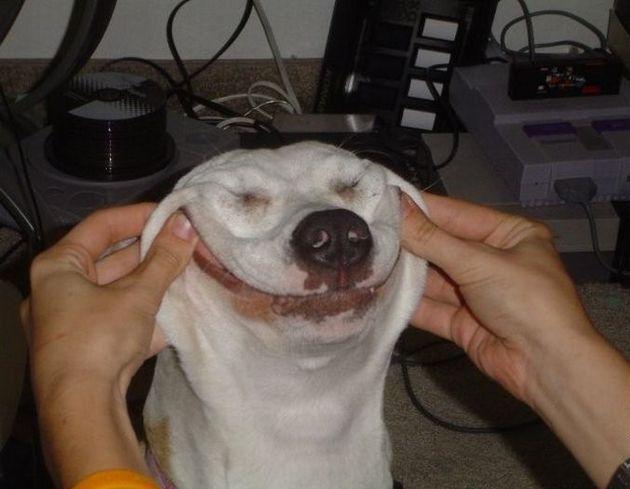 陽気でかわいい犬(わんこ)の画像