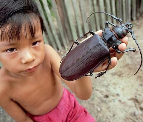 カミキリ虫