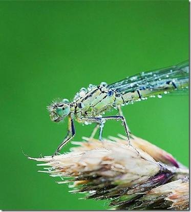 クリスタル昆虫