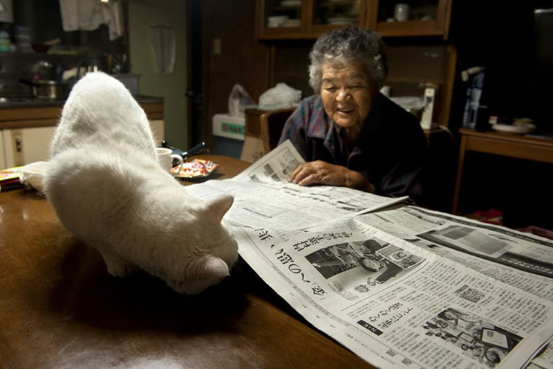 japanese-grandma-and-her-cat-miyoko-ihara-6