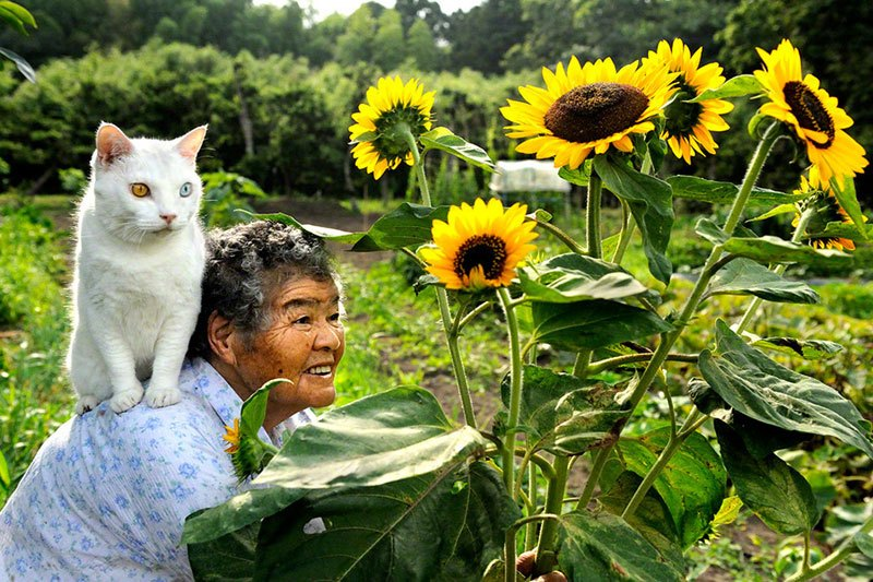 japanese-grandma-and-her-cat-miyoko-ihara-7