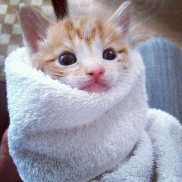 動物ねこの毛布