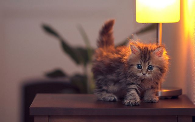 かわいい動物のコレクション画像 (19)