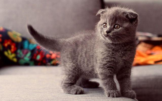 かわいい動物のコレクション画像 (2)