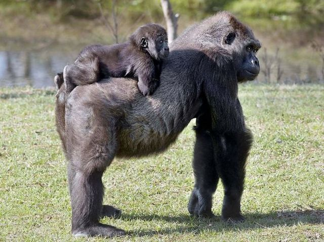 かわいい動物のコレクション画像 (3)