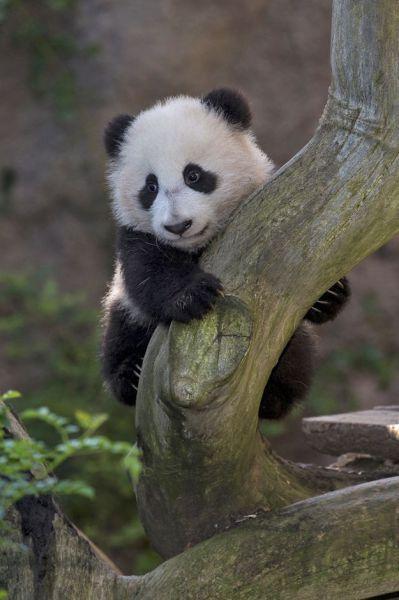 かわいい動物のコレクション画像 (38)