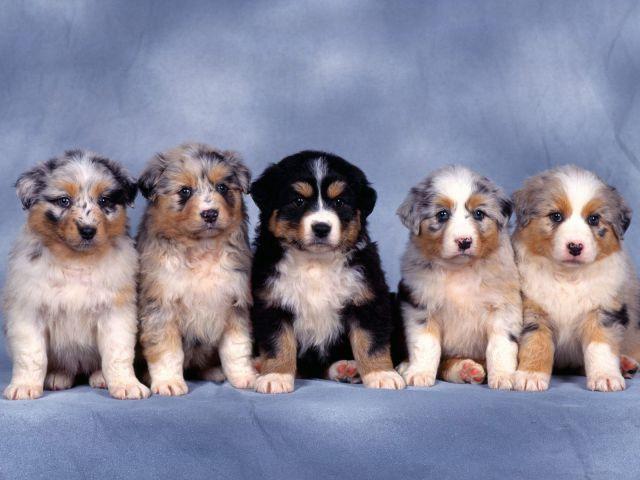 かわいい動物のコレクション画像 (4)