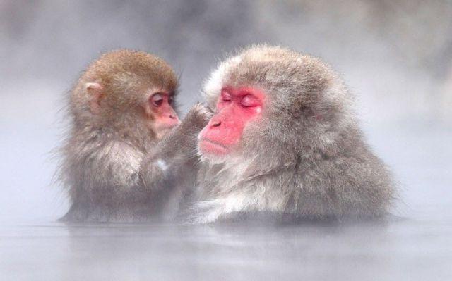 かわいい動物のコレクション画像 (50)