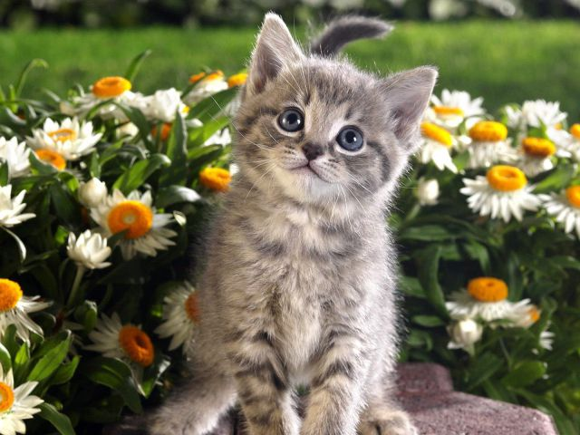 かわいい動物のコレクション画像 (51)