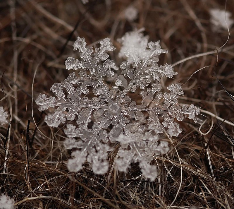 雪の結晶が美しいマクロ写真 (1)
