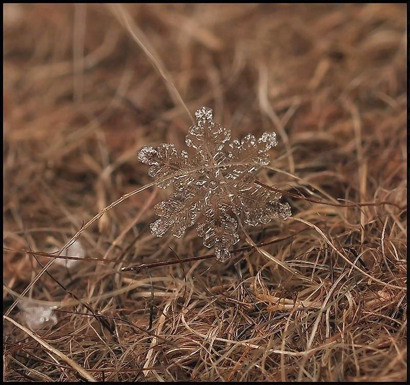 雪の結晶が美しいマクロ写真 (10)