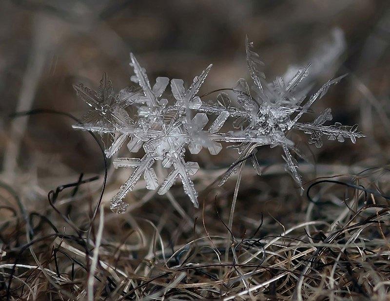 雪の結晶が美しいマクロ写真 (2)