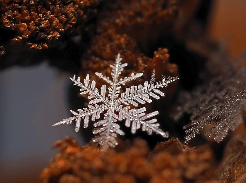 雪の結晶が美しいマクロ写真 (3)