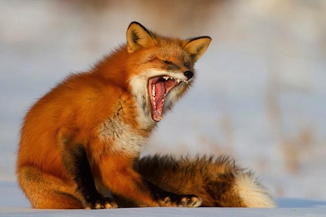 yawning05